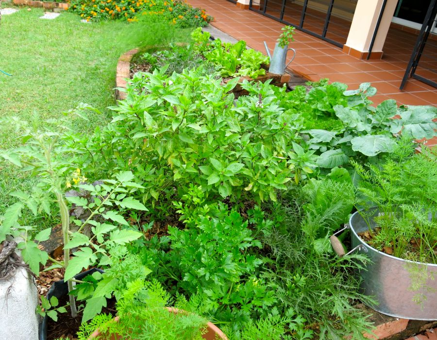 Rescue remedies for stressed out plants (part1)