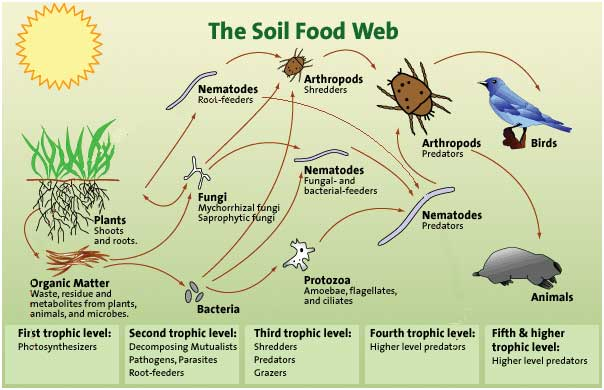 soilfoodweb_ingram